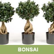 GKR_Kunstpflanzen_Bonsai_Quadrat