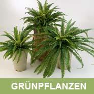 GKR_Kunstpflanzen_Grünpflanze_Quadrat