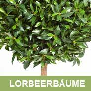 GKR_Kunstpflanzen_Lorbeerbäume_Quadrat