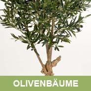 GKR_Kunstpflanzen_Olivenbaeume_Quadrat