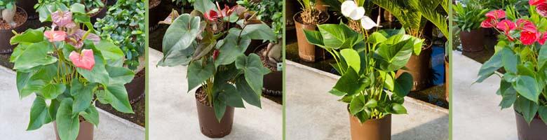 Pflanzenparadies GKR Hydrokulturen 02