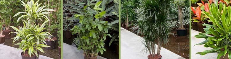 Pflanzenparadies