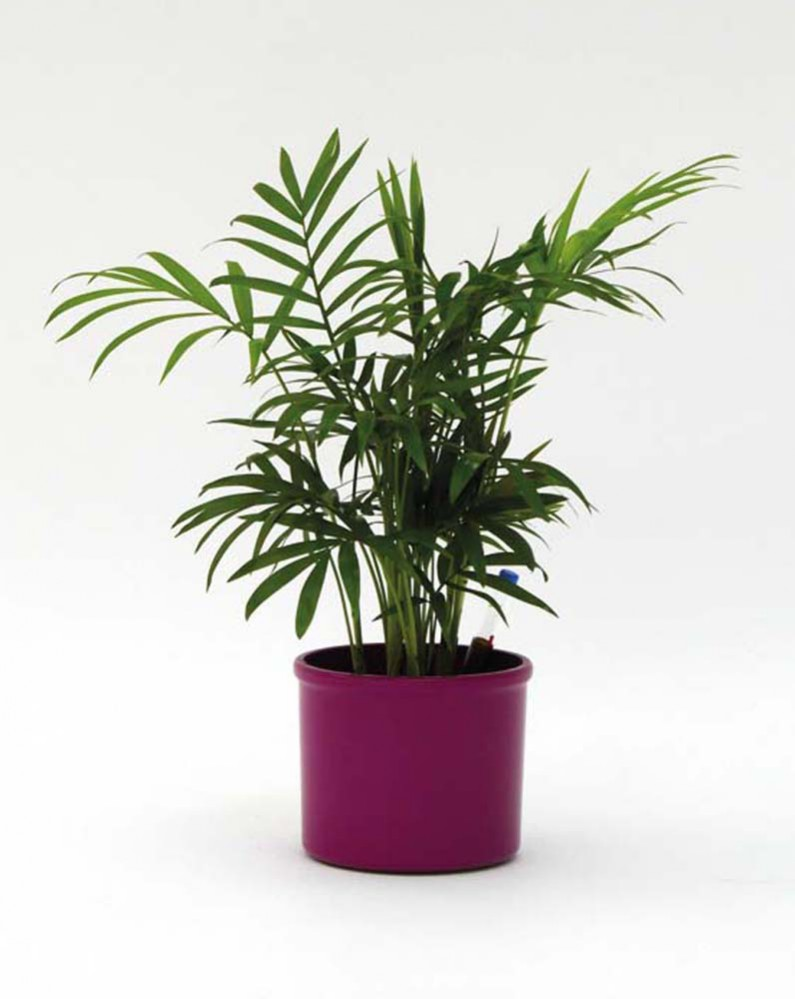 Plants 4 Kids