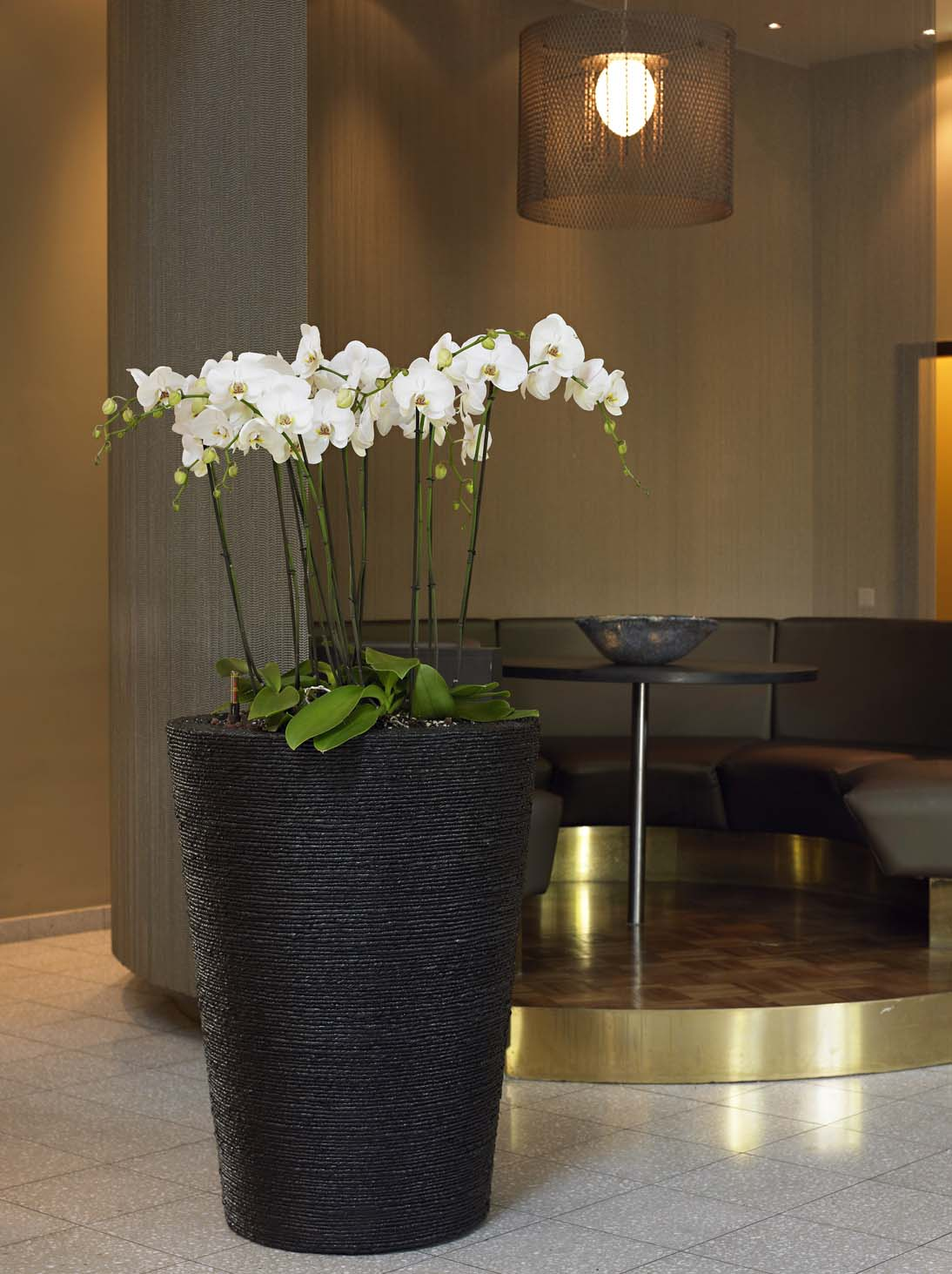 GKR Orchideen 09