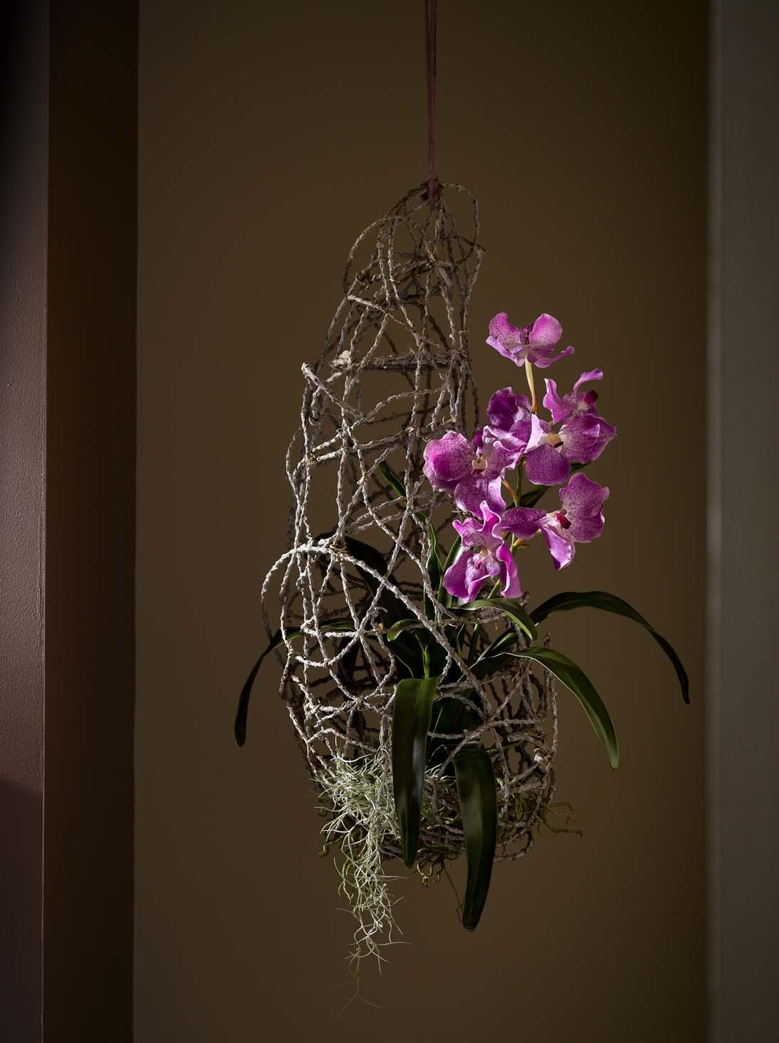 GKR Orchideen 12