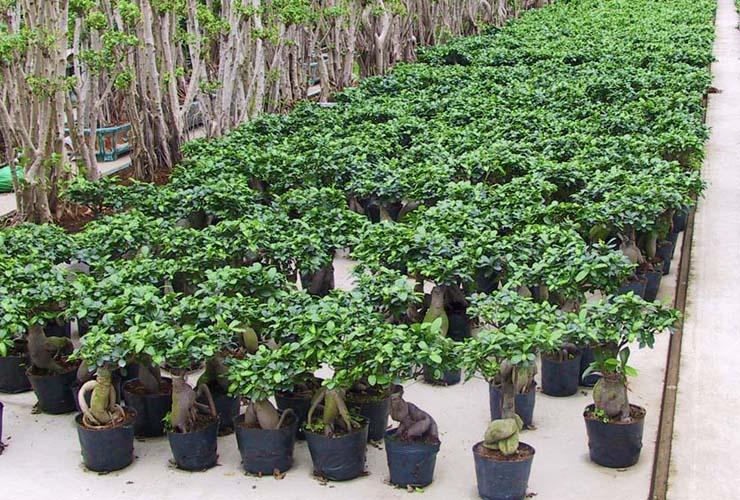 GKR Erdpflanzen und Hydrokulturpflanzen