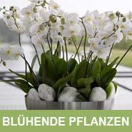 GKR_Kunstpflanzen_Blüher_Quadrat