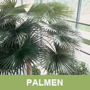 GKR_Kunstpflanzen_Palmen_Quadrat