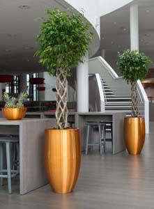 Pflanzgefäße für Büro und Haus