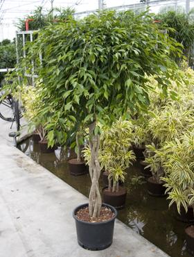 Pflanzen kaufen