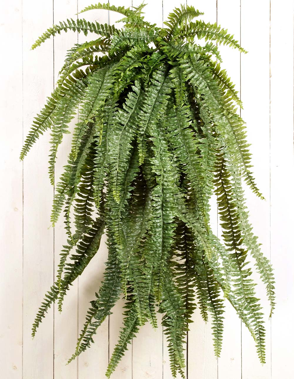 Pictures of hanging plants Books Online - Online Bookshops, Bookstores, Book Shops