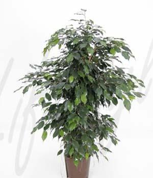 Schadstoffreduzierende Pflanze